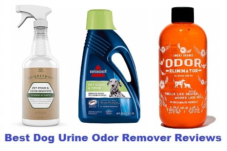 Best Dog Urine Odor Remover Reviews