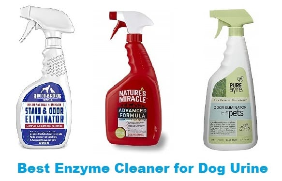 Best Enzyme Cleaner For Dog Urine 2020