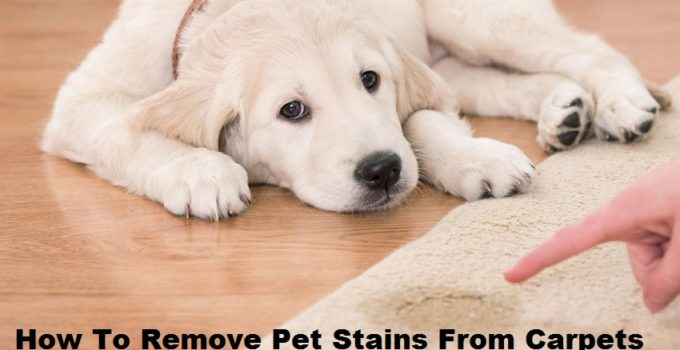 How To Remove Pet Stains From Carpets