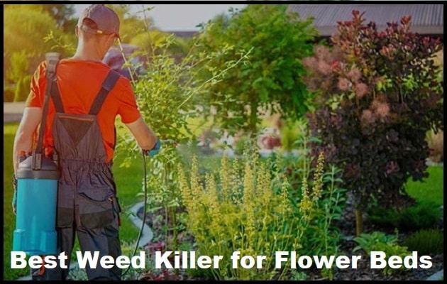 Best Weed Killer for Flower Beds