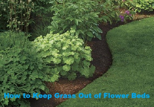 How to Keep Grass Out of Flower Beds