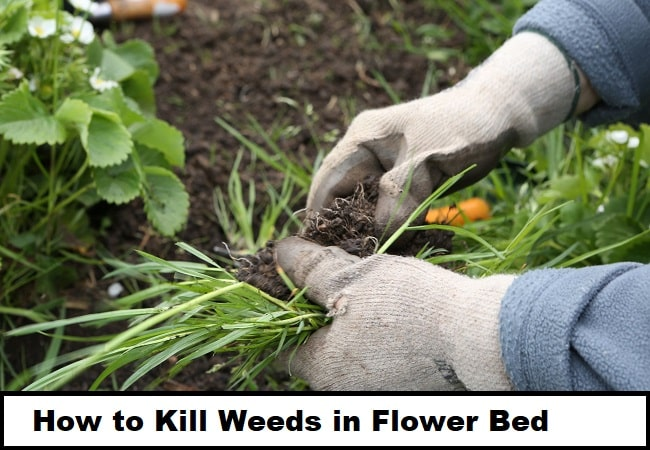 How to Kill Weeds in Flower Bed