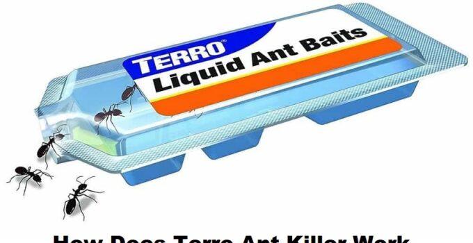 How Does Terro Ant Killer Work