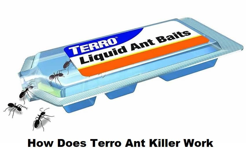 How Does Terro Ant Killer Work