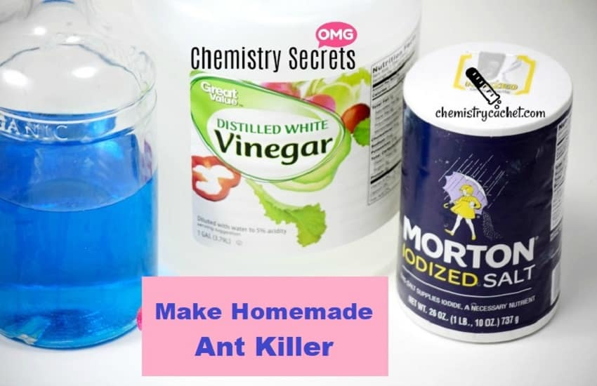 How To Make Homemade Ant Killer
